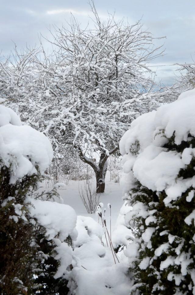 vinterhage1