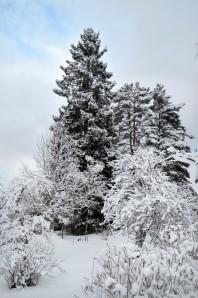 vinterhage2