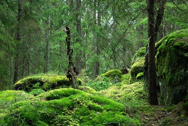 På jakt etter eventyrskog
