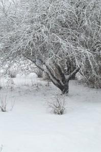 vinterhagen11
