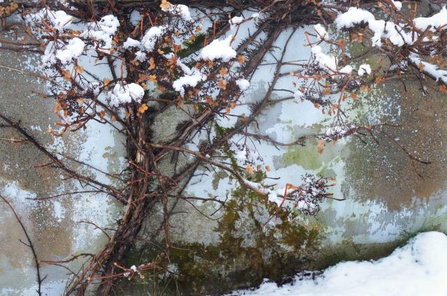 vinterhagen12