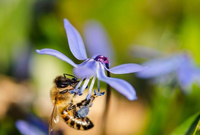 Biebesøk