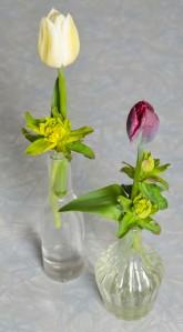tulipan4