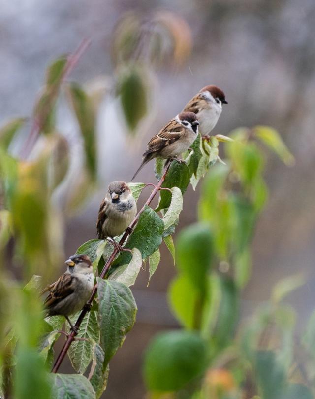Høstfugler-2