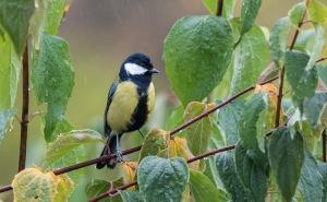 Høstfugler-3