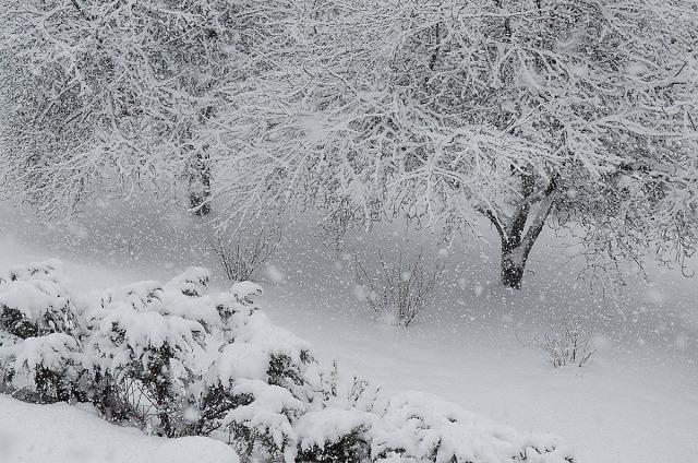 snødrev