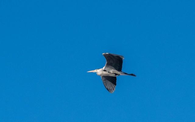 paaskefugler-3