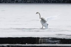 Gjersjøen-3