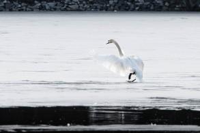 Gjersjøen-4