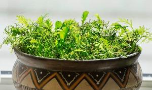 småplanter1
