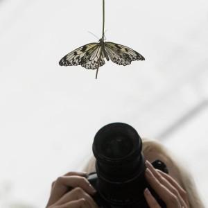 Sommerfugl-London-2