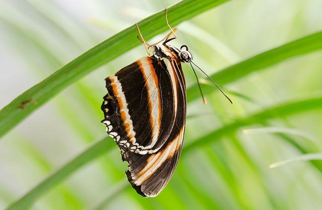 sommerfugl1
