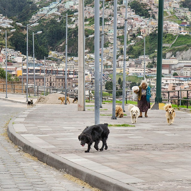 Quitogate5