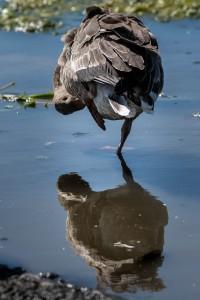 Østensjø-fugler-2