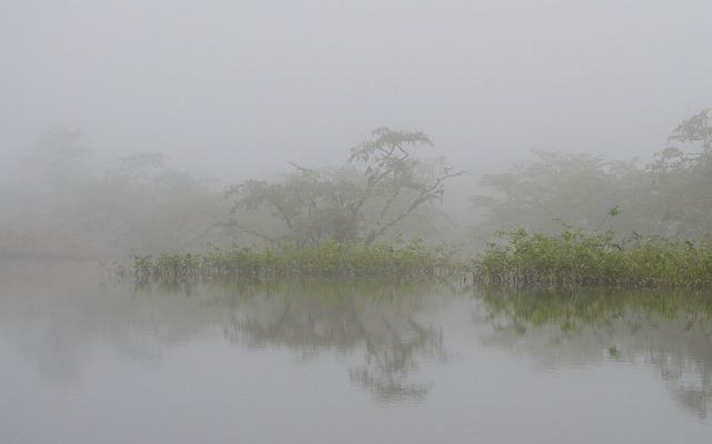 Amazonasmorgen