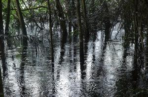 Amazonasregn