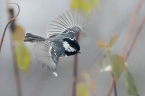 Nyttårsfugler-1