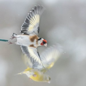Nyttårsfugler-2