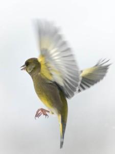 Nyttårsfugler-3
