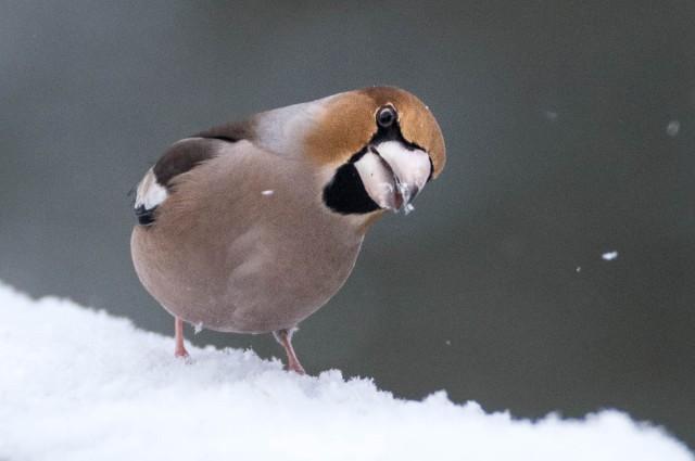 Nyttårsfugler-4