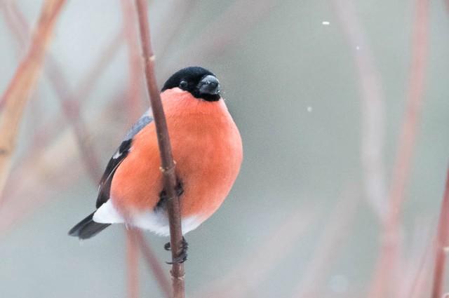 Nyttårsfugler-5