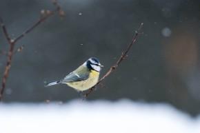 Nyttårsfugler-8