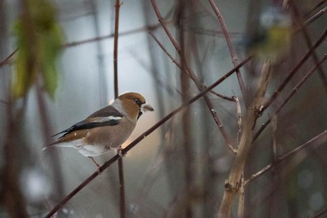 Nyttårsfugler-9