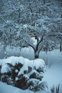 vinterhage
