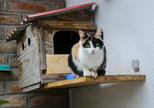 Katt_hosmammahilda