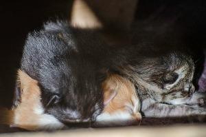 Katt_kattungermammahilda