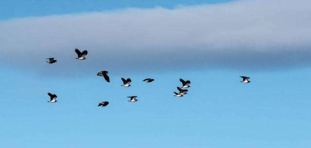 Østensjøfugler_påske-1