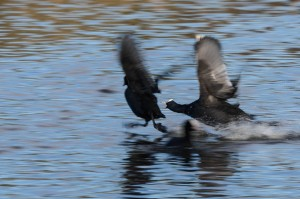 Østensjøfugler_påske-5